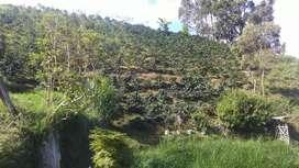 Vendo finca en ginebra valle corregimiento de las hermosas