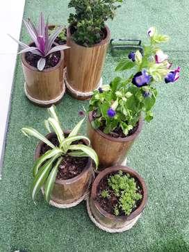 Set 3 plantas
