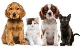 Se  cuidan mascotas perros y gatos