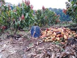 Venta de finca con Cacao en la ciudad del Coca Orellana