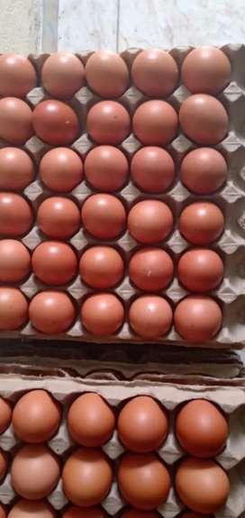 Venta de huevo AA