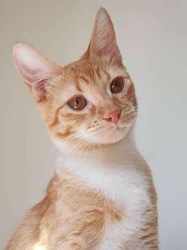 Gato/Gata Hembra en Adopción!- Almagro, CABA