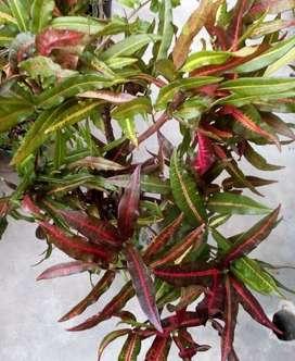 Vendo plantas exterior