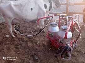 Ordeñadora para vaca