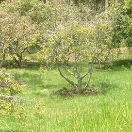 Terreno en San Bartolome Sigsig Azuay 11 hectáreas