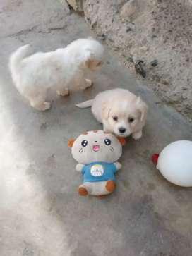Lindos perritos