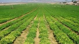 Ingeniero agropecuario con gestion empresarial