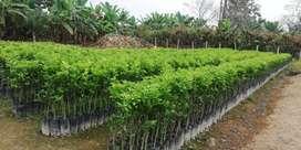 VIVERO EL PARAÍSO... vendemos todo tipo de plantas frutales injertadas
