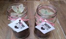 Souvenirs Terrarios de Cactus, Suculenta