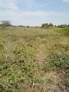 Remato 1 hectárea agrícola en Sechura. Piura.