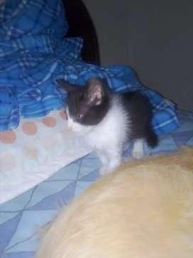 Lindo gato para adoptar