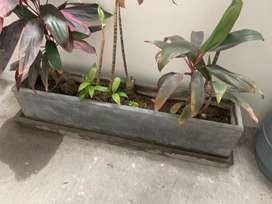 Macetas con plantas y sin