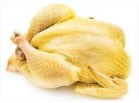 Pollo Semicriollo
