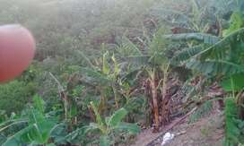 Venta de Finca en Sábana de Torres Santander Parcela productiva