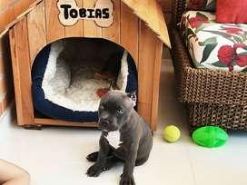 Venta de casas para perros