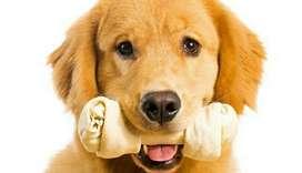 Casa para Mascotas Perros Envio Gratis