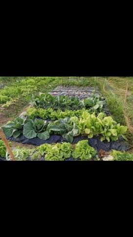 producción de hortalizas orgánicas u agroecologicas