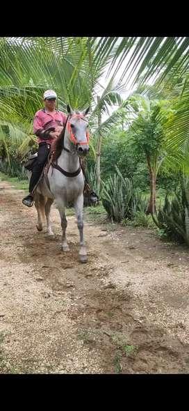 Yegua Mora