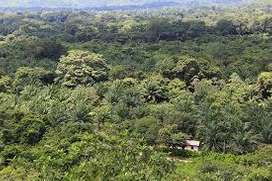 se vende finca de 150 hectáreas muy económica con carbon para explotar