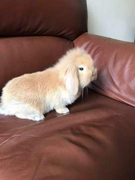 Pequeños conejos