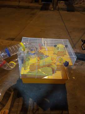 Haula de hamster nueva