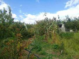 Casa y terreno con Huerta Nueva Frutal