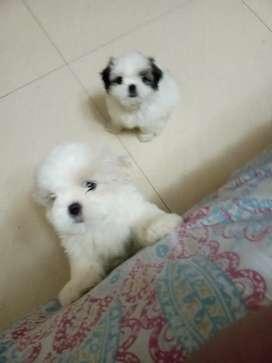 Venta de perritos