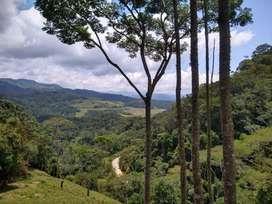 Lote de 1 hectarea en venta- carretera principal entre San Rafael y San Carlos Antioquia-oportunidad de inversion