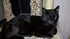 Hermoso gatico en adopción