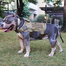 Arnes Pechera Tactico Militar Chaleco Para Perros Talla M Centro Comercial Monterrey Local s5 Sótano