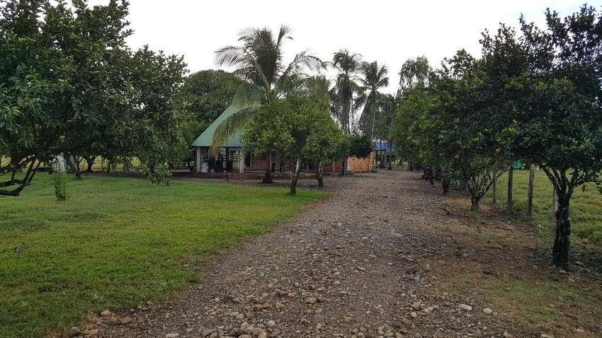 Se Vende Finca de 41 Ha 4205m2 en Yopal