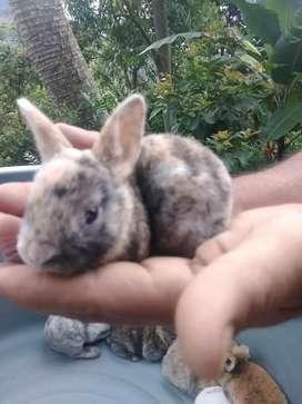 Hermosos conejos anti alérgicos