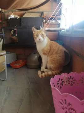 gaticos en adopción responsable