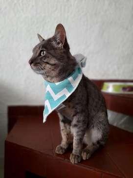 Hermoso gatico de un año en adopción