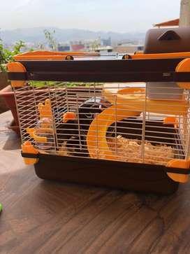 Pack Hamster