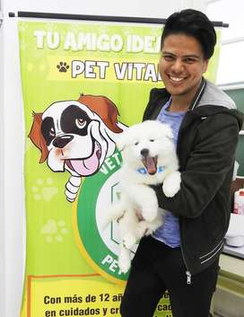 CACHORROS ADORABLES SAMOYEDO EN PET VITAL !!!