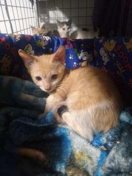 Hermosos gaticos bebés en adopción