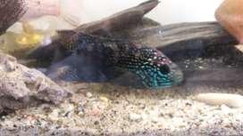 Vendo mrda y acuario completo exotico