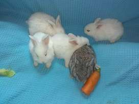 Vendo conejos para mascota 350