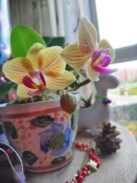 Plantas orquideas