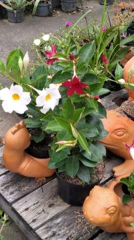 venta de plantas para jardin