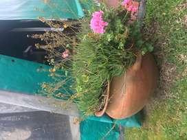Tinaja de barro grande planta