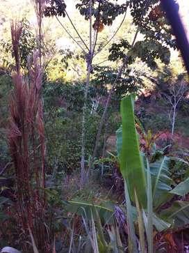 Terreno agricola 2  y 1/4 hect. Apto pescisgranja con plantación de café cacao bananas