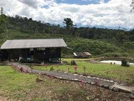Vendo hermosa finca de 33 hectáreas en Puyo