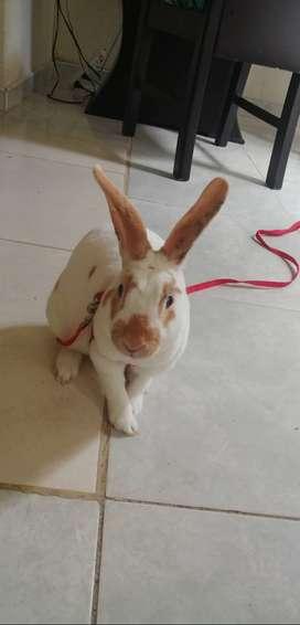 Se vende conejo antialergico
