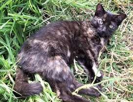 Hermosas gatitas en adopción