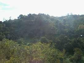 Finca Valle de Tenza