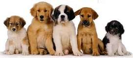 Hospedaje Canino en V Bosch