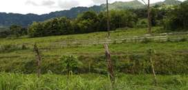 Vendo cuadras de tierra en zona cercana a Chone
