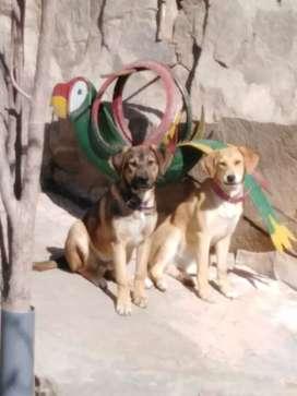 En adopción perritos 6 meses